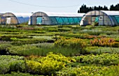 GARDEN OF OLIVIER FILIPPI  MEZE  FRANCE: THE NURSERY BEDS AND POLYTUNNELS