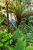 TREBAH GARDEN  CORNWALL: WATERFALL OVER NATURAL ROCK - THE CASCADE AND STUMPERY