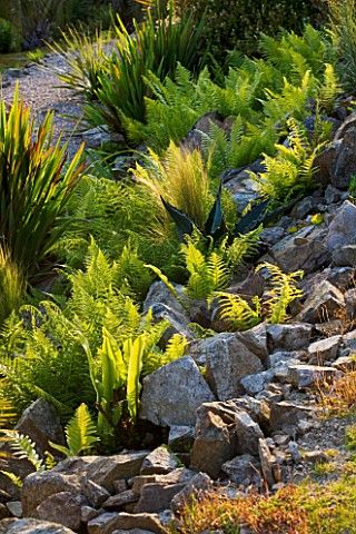TREMENHEERE_SCULPTURE_GARDENS__CORNWALL_FERNS_AND_AGAVES_GROWING_IN_ROCKS_IN_THE_HOT__ARID_GARDEN