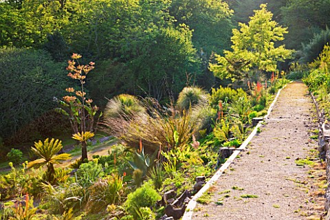 TREMENHEERE_SCULPTURE_GARDENS__CORNWALL_PATH_THROUGH_THE_HOT__ARID_GARDEN
