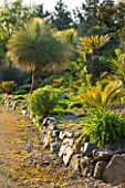 TREMENHEERE SCULPTURE GARDENS  CORNWALL: XANTHORRHOEA GLAUCA AND CYCAS REVOLUTA IN THE HOT  ARID GARDEN
