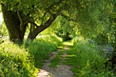 GLYNDEBOURNE, EAST SUSSEX: VIEW ALONG LANE IN SUMMER WITH TREES - TRANQUIL, PEACEFUL, COUNTRY GARDEN, LANDSCAPE