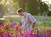 RAGLEY HALL  WARWICKSHIRE: ROSS BARBOUR  HEAD GARDENER  ATTENDS TO BORDER IN FRONT OF HALL IN ROSE GARDEN - DAWN LIGHT ON SALVIA CARADONNA AND ROSE BRAVEHEART