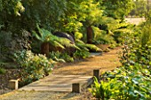 GARDEN IN KENT DESIGNED BY BELLA WHITELEY: WOODEN BRIDGE AND PATH PAST TREE FERNS, DICKSONIA ANTARCTICA, WOODLAND, SHADE, SHADY, WOOD, PATHS
