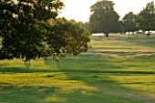 BROUGHTON CASTLE, OXFORDSHIRE:SHEEP GRAZING IN THE PARKLAND - TREES, LANDSCPAE, COUNTRY GARDEN, CLASSIC, SUMMER, ANIMALS