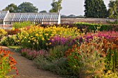 HELMSLEY WALLED GARDEN  YORKSHIRE: THE HERBACEOUS BORDER IN JULY DOMINATED BY ACHILEAS  LYTHRUM  HELENIUMS AND FENNEL  WITH GREENHOUSE BEHIND