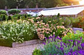 SLEDMERE HOUSE GARDEN, YORKSHIRE: BORDER BESIDE THE GREENHOUSE IN THE WALLED GARDEN - SUNSET, ALSTROEMERIAS, SALVIAS, FLOWERS, FLOWERING, SUMMER, GRAVEL, PATH, GLASSHOUSE