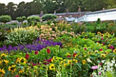 SLEDMERE HOUSE GARDEN, YORKSHIRE: BORDER BESIDE THE GREENHOUSE IN THE WALLED GARDEN - SUNSET, ALSTROEMERIAS, SALVIAS, SUNFLOWERS, FLOWERS, FLOWERING, SUMMER, GRAVEL, PATH