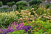SLEDMERE HOUSE GARDEN, YORKSHIRE: BORDER IN THE WALLED GARDEN WITH ALSTROEMERIAS AND SALVIAS - COUNTRY GARDEN, SUMMER, AUGUST, EVENING LIGHT