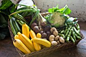 SLEDMERE HOUSE GARDEN, YORKSHIRE: BASKET OF VEGETABLES FROM THE WALLED GARDEN - COURGETTES, CAULIFLOWER, POTATOES - STILL LIFE, ORGANIC, FOOD, SUMMER, BOUNTY,  AUGUST