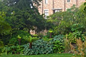 GLYNDEBOURNE, EAST SUSSEX: TREE FERNS IN THE EXOTIC BOURNE GARDEN WITH THE OPERA HOUSE BEHIND - GREEN BORDER