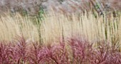 GRASSES BLOWING IN THE WIND - SLOW EXPOSURE TO CAPTURE MOVEMENT: KEW GARDENS  SURREY