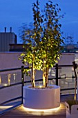 ZIGGURAT ROOF GARDEN BY AMIR SCHLEZINGER  MY LANDSCAPES: LIGHTING - CONTAINER LIT UP AT NIGHT PLANTED WITH BETULA ALBOSINENSIS FASCINATION