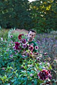 CHATEAU DE CHENONCEAU  FRANCE: FLORIST DAVID HOGUET PICKS DAHLIAS FOR A FLOWER DISPLAY IN THE CHATEAU IN THE POTAGER/ CUTTING GARDEN  MORNING LIGHT