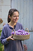 DOMINIQUE BLANCHARD SAFFRON FARM  LOIRE VALLEY FRANCE: DOMINIQUE HOLDING A BASKET OF FRESHLY PICKED CROCUS SATIVUS
