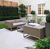 BASEMENT GARDEN MONTAGUE SQUARE  LONDON  DESIGNED BY AMIR SCHLEZINGER OF MY LANDSCAPES: BASEMENT GARDEN WITH TABLE AND CHAIRS  TROCHODENDRON ARALIODES  SCREEN OF HEDERA WOERNER
