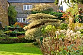 PETTIFERS GARDEN  OXFORDSHIRE  IN AUTUMN: VIEW TO HOUSE WITH MISCANTHUS SINENSIS NIPPON AND CORNUS ALTERNIFOLIA ARGENTEA