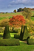 PETTIFERS GARDEN  OXFORDSHIRE  IN AUTUMN: THE PARTERRE WITH AMSONIA HUBRICHTII AND SORBUS JOSEPH ROCK