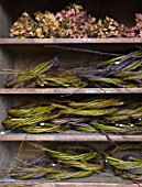 COMMON FARM FLOWERS. SOMERSET: AN OLD DRESSER HOUSES STACKS OF WILLOW WREATHS AWAITING DECORATION  TOGETHER WITH HEAPS OF DRIED HYDRANGEA HEADS  ALL BRITISH GROWN.