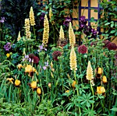 INFORMAL PLANTING OF ALLIUMS  LUPINS AND IRISES. CHELSEA 1993. NATIONAL ASTHMA CAMPAIGN GARDEN. DESIGNER LUCY HUNTINGTON