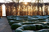 BROUGHTON GRANGE, OXFORDSHIRE: DESIGNER TOM STUART - SMITH: CLIPPED TOPIARY BOX HEDGES IN FROST WITH BEECH HEDGE. PARTERRE. WINTER, COUNTRY GARDEN, TRIMMED, HEDGING, MOUND, DAWN