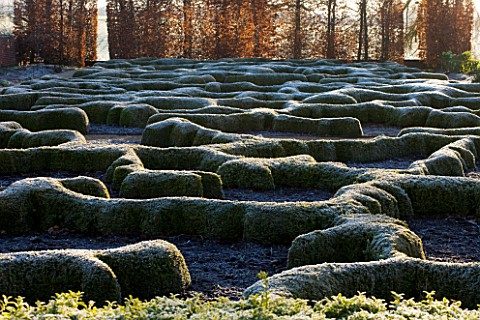 BROUGHTON_GRANGE_OXFORDSHIRE_DESIGNER_TOM_STUART__SMITH_CLIPPED_TOPIARY_BOX_HEDGES_IN_FROST_WITH_BEE