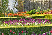 ARUNDEL CASTLE GARDENS, WEST SUSSEX: THE WALLED GARDENS: THE CUTTING GARDEN WITH TULIPS NEGRITA, WILDHOF AND APELDOORNS ELITE