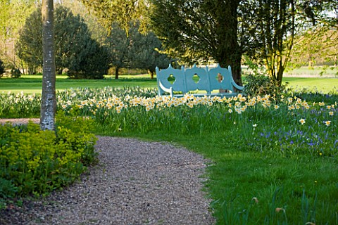 COUGHTON_COURT__WARWICKSHIRE_NARCISSI_NATURALISED_IN_GRASS_BESIDE_BLUE_PAINTED_BENCHAMONG_THE_VARIET