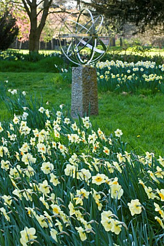 COUGHTON_COURT__WARWICKSHIRE_DR_TOMS_SECRET_DAFFODIL_GARDEN_RARE_THROCKMORTON_DAFFODIL_COLLECTION__B