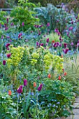GRAVETYE MANOR  SUSSEX: EARLY MORNING SPRING LIGHT ON BORDER WITHG TULIPS AND EUPHORBIA