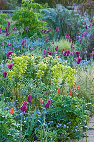 GRAVETYE_MANOR__SUSSEX_EARLY_MORNING_SPRING_LIGHT_ON_BORDER_WITHG_TULIPS_AND_EUPHORBIA