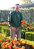ARUNDEL CASTLE, WEST SUSSEX - HEAD GARDENER MARTIN DUNCAN PICKING APELDOORNS ELITE TULIPS IN WALLED GARDENS: THE ORGANIC KITCHEN GARDEN