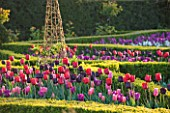 ARUNDEL CASTLE GARDENS, WEST SUSSEX: THE WALLED GARDENS: THE CUTTING GARDEN WITH MIXED TULIPS USING PASSIONALE, MISTRESS, PAUL SCHERER AND BASTOGNE.