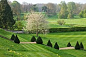 EASTON WALLED GARDEN  LINCOLNSHIRE: VIEW OF TIERED GARDEN AND PARK IN APRIL WITH TREE IN FULL SPRING BLOSSOM. CLIPPED YEW TOPIARY  NATURALISED COWSLIPS AND STRIPED LAWNS. FORMAL.
