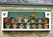 EASTON WALLED GARDEN  LINCOLNSHIRE: PAINTED DUCK-EGG BLUE & WHITE SHELF WITH AURICULA THEATRE ON STONE WALL. SPRING. FLOWERS. TERRACOTTA POTS  CONTAINERS.ART FEATURE ORNAMENTAL