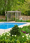ARALIA GARDEN DESIGN - PATRICIA FOX: WEDNESDAY HOUSE: SPRING GREEN TULIPS IN BED BESIDE SWIMMING POOL WITH WOODEN PERGOLA BEHIND