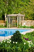 ARALIA GARDEN DESIGN - PATRICIA FOX: WEDNESDAY HOUSE: SPRING GREEN TULIPS IN BED BESIDE SWIMMING POOL WITH WOODEN PERGOLA