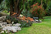 SICILY  ITALY: LA CASE BIVIERE NEAR LENTINI - ORANGE FLOWERS OF ALOE STRIATA BESIDE THE LAWN WITH BENCH AND CALLISTEMON COCCINEA