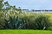 SICILY  ITALY: LA CASE BIVIERE NEAR LENTINI - AGAVE FEROX  AND PAMPAS GRASS IN FOREGROUND WITH A LINE OF PINUS PINEA IN DISTANCE