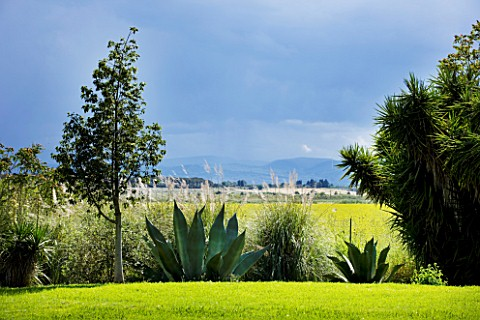 SICILY__ITALY_LA_CASE_BIVIERE_NEAR_LENTINI__AGAVE_FEROX__AND_PAMPAS_GRASS_IN_FOREGROUND_WITH_A_LINE_