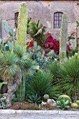 SICILY  ITALY: SAN GIULIANO ESTATE: CACTUS GARDEN AT VILLA ENTRANCE WITH YUCCA THOMPSONIANA, TRICHOCEREUS TERSCHEKII, DASYLIRION SERRATIFOLIUM AND OPUNTIA FICUS - INDICA