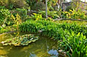SICILY  ITALY: SAN GIULIANO ESTATE: EXISTING POOL IN THE ARABIC GARDEN, STREWN WITH TROPICAL WATER LILY NYMPHAEA VICTORIA CRUZIANA, BORDERED WITH CALLA LILY, ZANTADESCIA AETHIOPICA