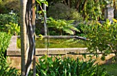 SICILY  ITALY: SAN GIULIANO ESTATE: A RAISED REFLECTING POOL CREATED BY RACHEL LAMB IN THE ARABIC GARDEN LUSH WITH SURROUNDING VEGETATION. AGAPNTHUS AND TREE FERN - CYATHEA AUSTRALIS