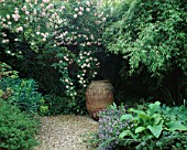 SHADY BORDER: PYRANEAN OLIVE OIL JAR SURROUNDED BY ROSA CECILE BRUNNER AND ARUNDINARIA MURIELAE. TURN END  BUCKS