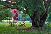 SICILY  ITALY: SAN GIULIANO ESTATE: SEATING ON THE UPPER LAWN BENEATH THE SHADE OF A CEDAR ( CEDRUS ) TREE