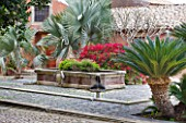 SICILY  ITALY: SAN GIULIANO ESTATE: THE FOUNTAIN TERRACE: BISMARK PALM - BISMARKIA NOBILIS, CYCAS CIRCINALIS, PRICKLY PEAR - OPUNTIA FICUS-INDICA AND BOUGAINVILLEA
