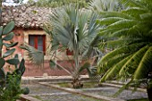 SICILY  ITALY: SAN GIULIANO ESTATE: THE FOUNTAIN TERRACE WITH BISMARK PALM - BISMARKIA NOBILIS, CYCAS CIRCINALIS AND PRICKLY PEAR - OPUNTIA FICUS-INDICA