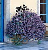 SICILY, ITALY: CASA CUSENI IN TAORMINA: PATIO, TERRACE WITH CONTAINER FILLED WITH AEONIUMS
