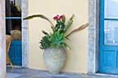 SICILY, ITALY: CASA CUSENI IN TAORMINA: SUCCULENTS IN A TERRACOTTA CONTAINER. CONTAINERS, JAR, GREEN, PLANTS. TERRACE, BLUE, DOOR