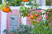 SICILY  ITALY: CASA CUSENI IN TAORMINA - UPPER TERRACE WITH ORANGE TREES AND ANCIENT SICILIAN AND TURKISH TILES - CITRUS  MEDITERRANEAN  FRUIT